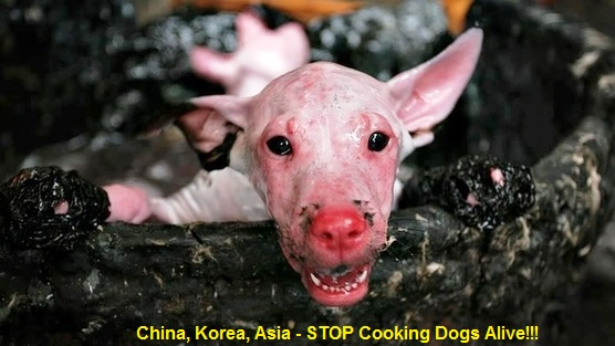 0001 China Korea Asia - Stop cooking dogs alive - caption text