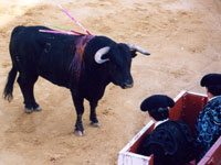 0047 Fight the proposal to give bullfighting legal protection in Spain