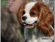 3308 dog finder pet grooming phoenix az